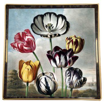 Square tulip tray